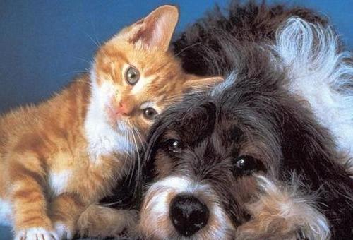 Кот и пёс.